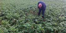Ets Delbecq & Fils sa - Produits agricoles